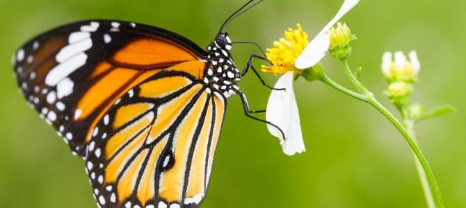 NEU: Hamburger Spaziergänge – Garten der Schmetterlinge